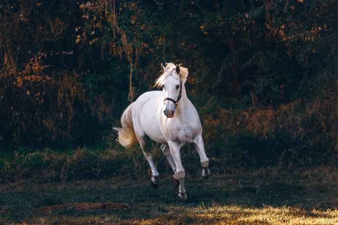white horse running on green field